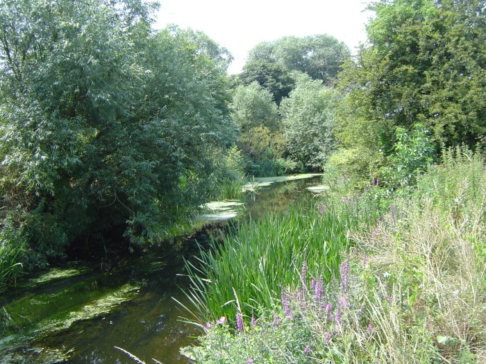 river roding 2 by peter house and carol murray.jpg