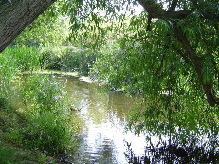 river roding by peter house and carol murray.jpg