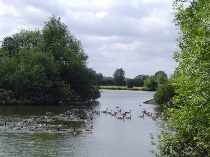 roding valley lake by peter house and carol murray.jpg